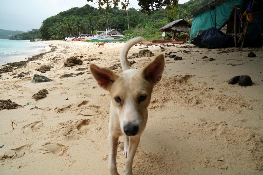 Punta Bunga Beach Hund