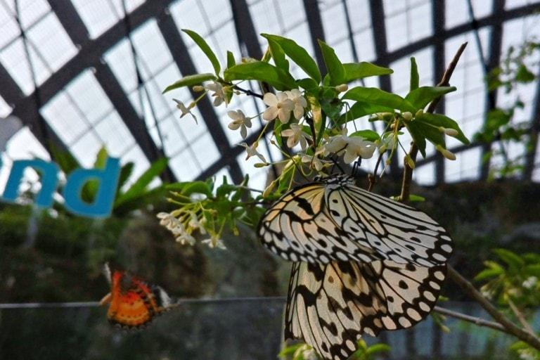 Entopia Butterfly Farm Penang Titel