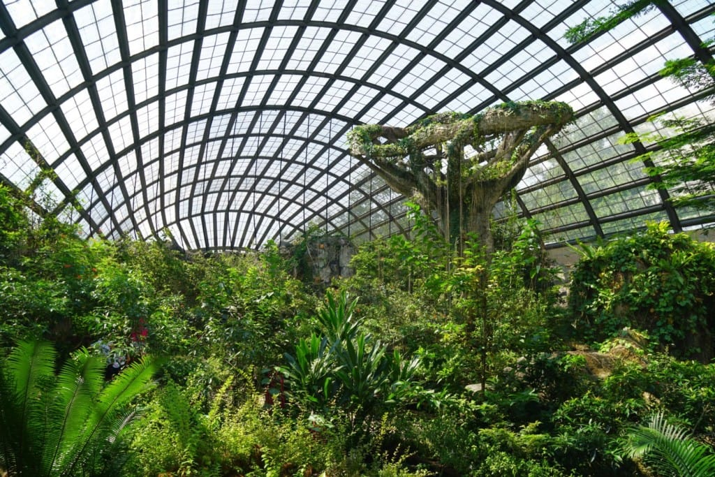 Riesenheuschrecken Penang