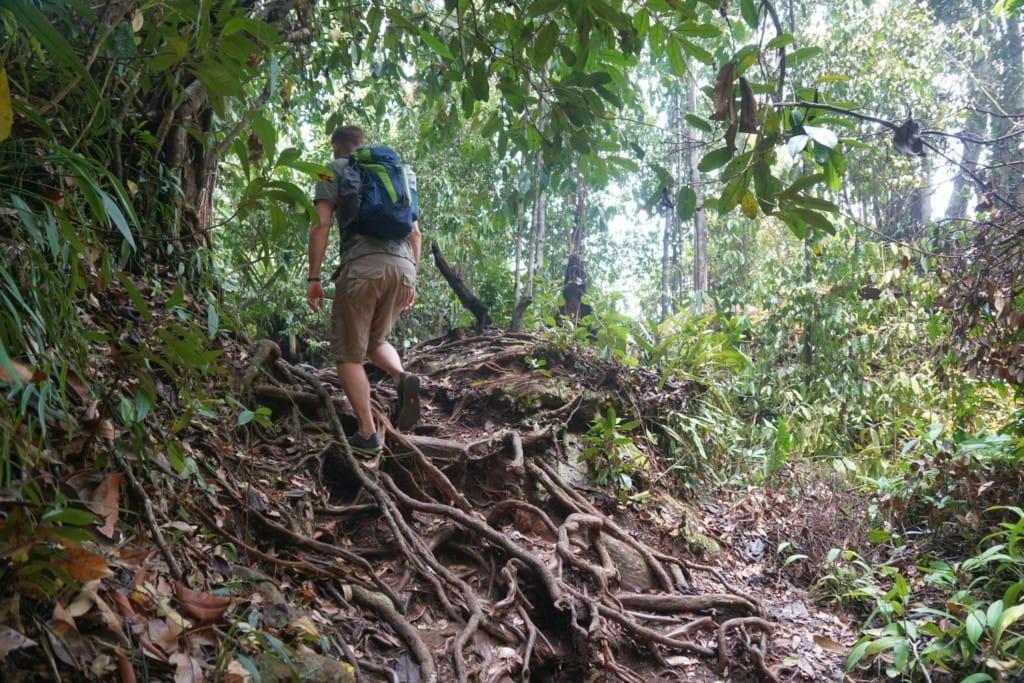 Telok Paku Trail Dschungel