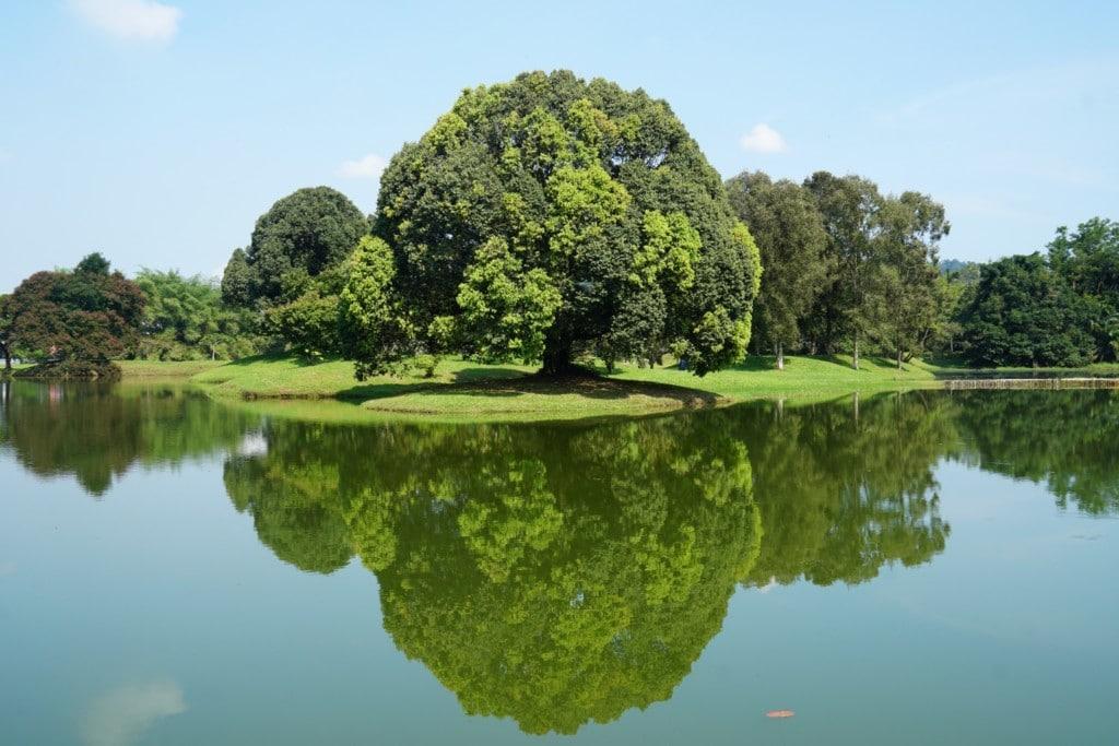 Taiping Natur