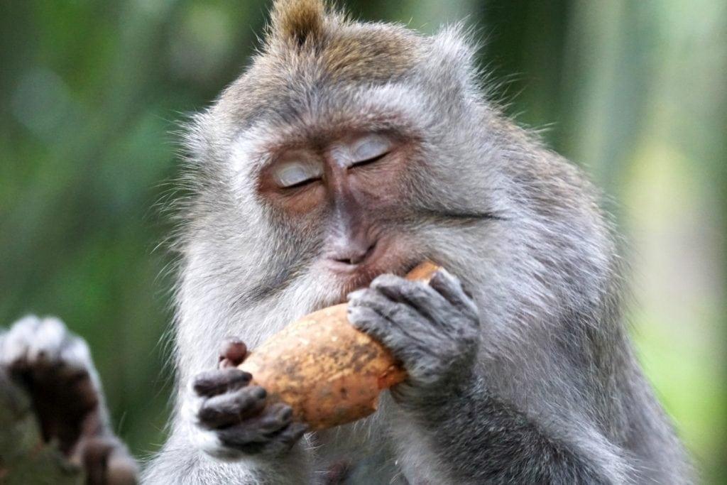 Ubud Sacred Monkey Fores