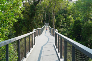 Langur Way Canopy Walk The Habitat