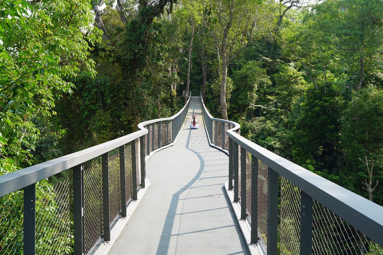 Langur Way Canopy Walk The Habitat