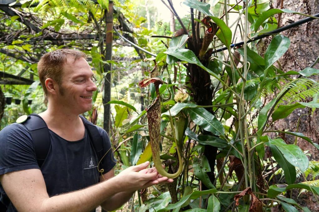 Monkey Cup Garden Malaysia