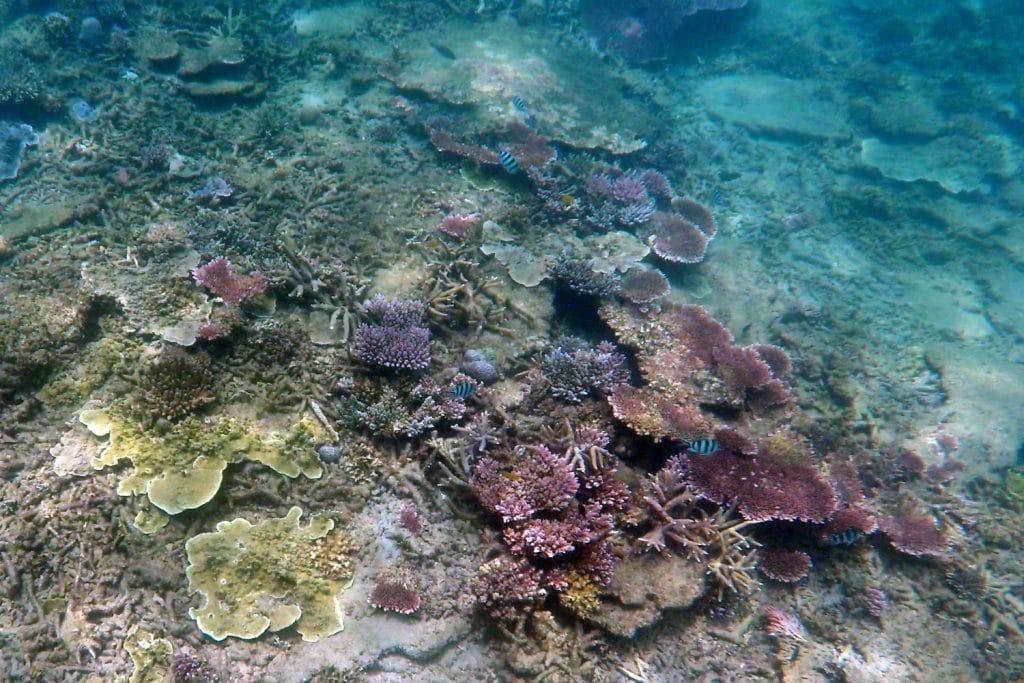 Pulau Kapas Schnorcheln