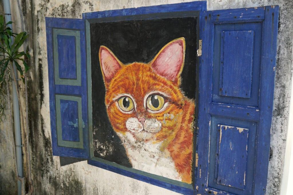 Katze die aus dem Fenser schaut